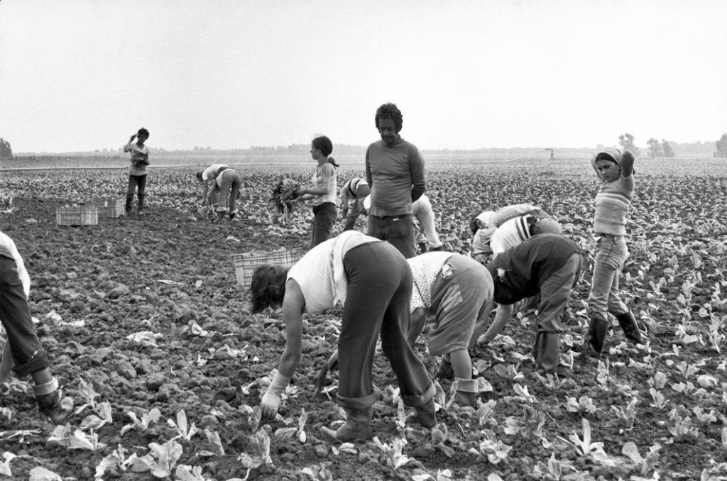 4) Henri Cartier-Bresson, ITALY. Basilicata. Metaponte. 1973. Private farm. Farm labourers and their foreman in a plantation of salads