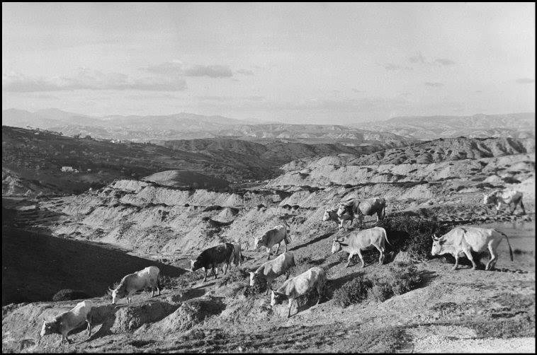 8) Henri Cartier-Bresson, ITALY. Basilicata. Aliano. 1951