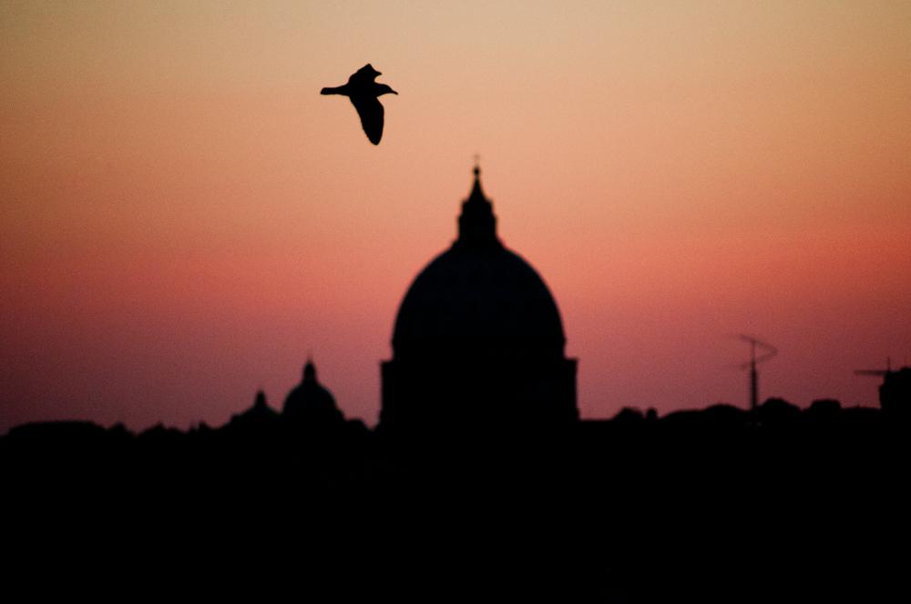 Roma sapeva che tutta la violenza è racchiusa nella precisione di un dettaglio,  2011