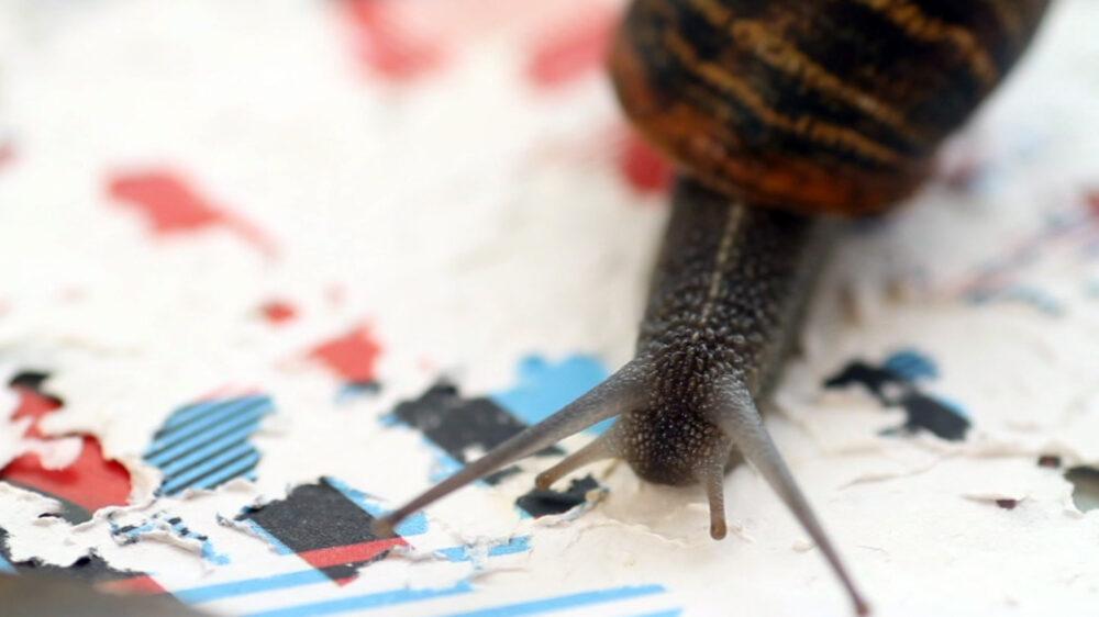 Gastropoda_©-Joan-Fontcuberta