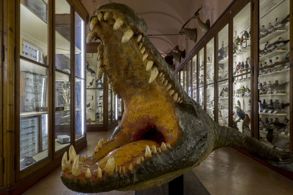 oan-Fontcuberta-Musei-Civici-di-Reggio-Emilia-Sala-di-Zoologia-2014